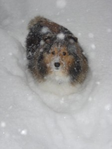 doginblizzardsmall